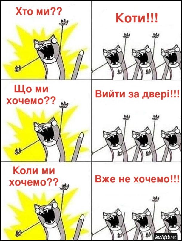 Мем коти. - Хто ми?? - Коти!!! - Що ми хочемо?? - Вийти за двері!!! Коли ми хочемо?? - Вже не хочемо