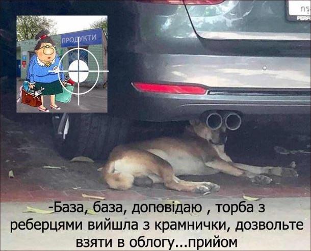 Прикол Собака сидить під авто: - База, база, доповідаю, торба з реберцями вийшла з крамнички, дозвольте взяти в облогу... прийом