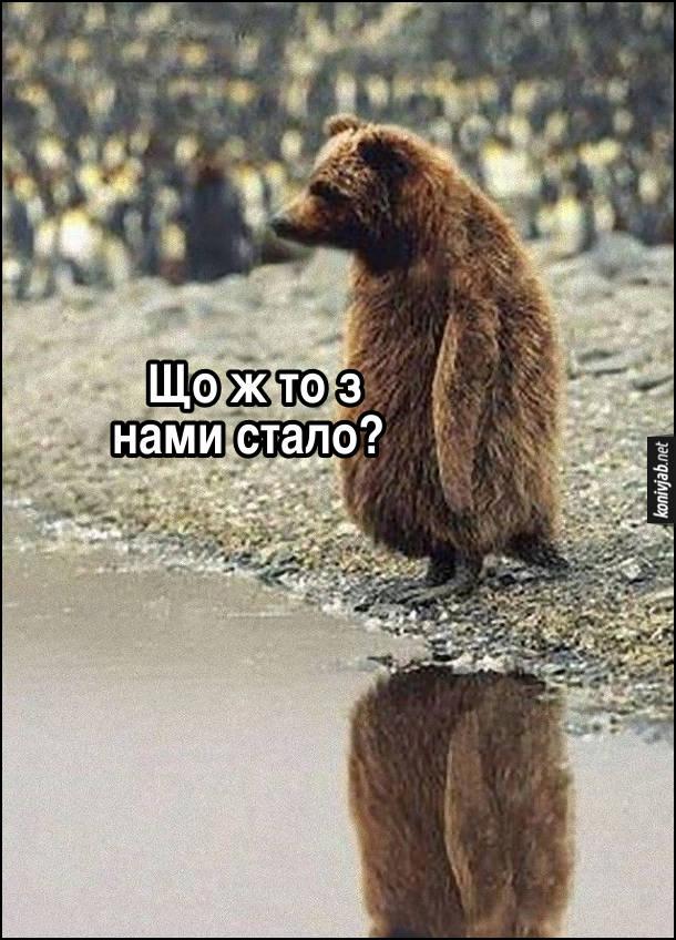 Смішна картинка Ведмідь-пінгвін стоїть біля водойми і думає: - Що ж то з нами стало?