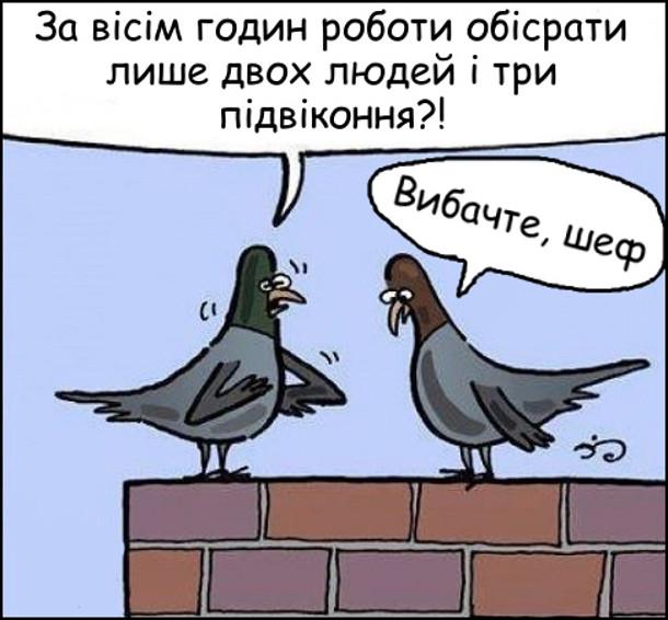 Смішний малюнок про голубів. Голуб-керівник: - За вісім годин гоботи обісрати лише двох людей і три підвіконня?! Голуб-працівник: - Вибачте, шеф