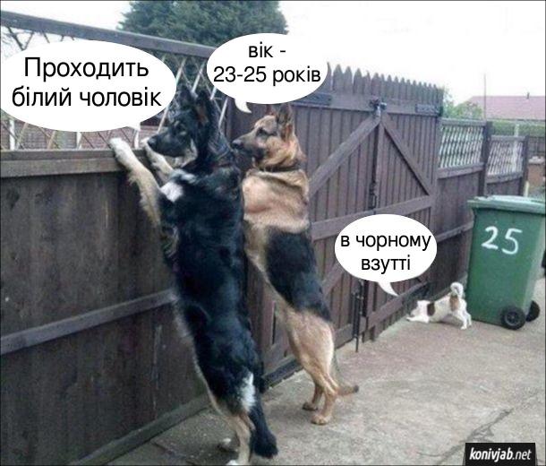 Прикол Собаки за забором. Троє собак виглядають з-за забору на вулицю. - Проходить білий чоловік. - Вік - 23-25 років. - В чорному взутті