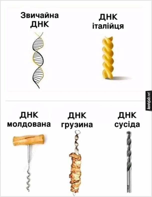 Жарт про ДНК. Звичайна ДНК, ДНК італійця (макаронина), ДНК молдована (штопор), ДНК грузина (шашлик), ДНК сусіда (свердло)