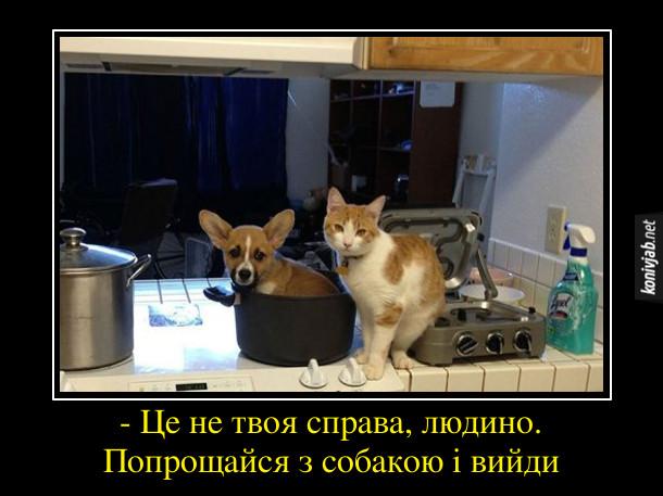 Смішне про кота і собаку. Застали на кухні кота біля плити, песик сидить в каструлі. Кіт: - Це не твоя справа, людино. Попрощайся з собакою і вийди