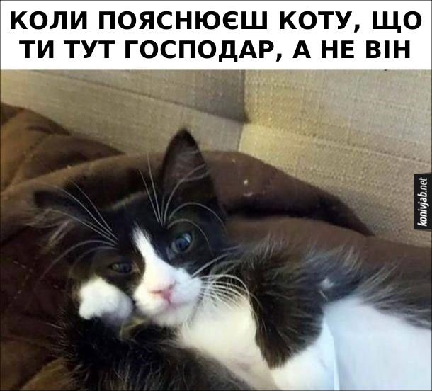 Мем Нахабний кіт. Коли пояснюєш коту, що ти тут господар, а не він.