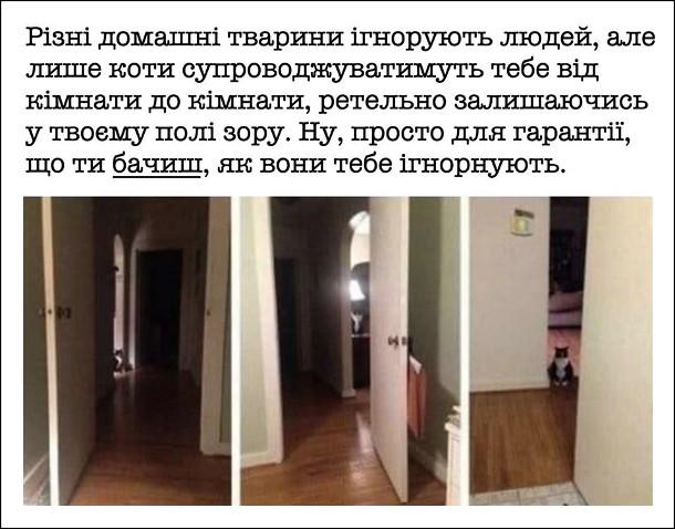 Жарт Поведінка кота. Різні домашні тварини ігнорують людей, але лише коти супроводжуватимуть тебе від кімнати до кімнати, ретельно залишаючись у твоєму полі зору. Ну, просто для гарантії, що ти бачиш, як вони тебе ігнорують.