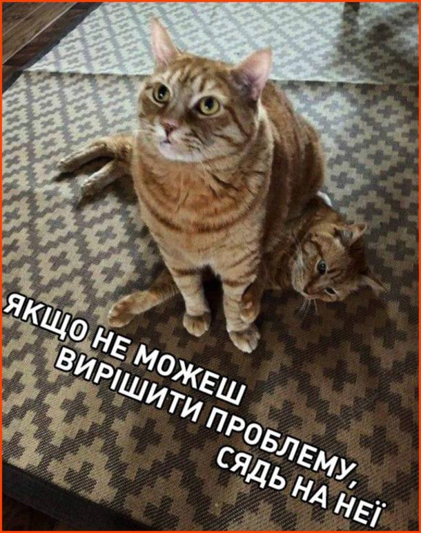 Прикол Кіт сів на кота. Якщо не можеш вирішити проблему, сядь на неї