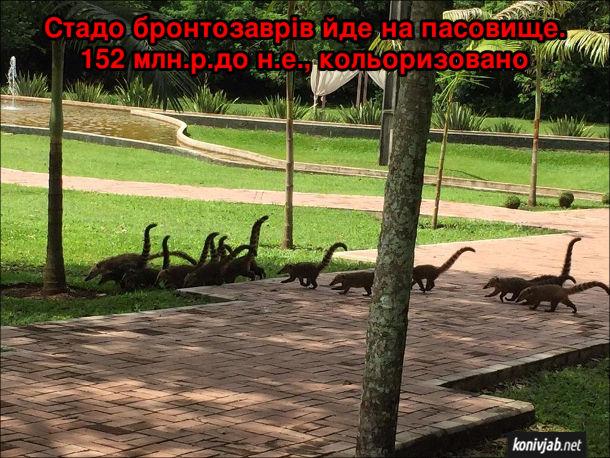Прикол Носухи схожі на динозаврів. Стадо бронтозаврів йде на пасовище. 152 млн.р.до н.е., кольоризовано