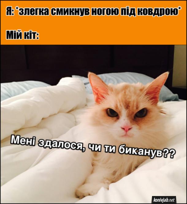 Прикол кіт на ліжку. Я: *злегка смикнув ногою під ковдрою*. Мій кіт: - Мені здалося, чи ти биканув??