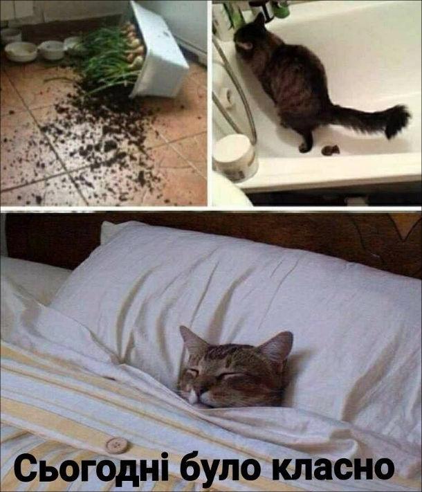 Прикол Типовий день кота. Кіт скинув на підлогу розсаду, наклав у ванній. Потім ввечері коли ліг в ліжко, задоволено промовив: - Сьогодні класно було