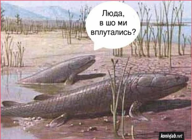 Прикол Еволюція. Дві водоплаваючі тварини вилазять на берег. - Люда, в шо ми вплутались?