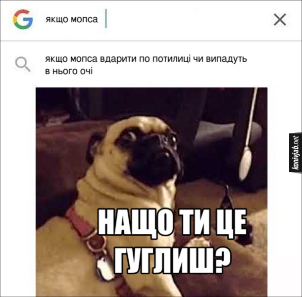"""Прикол про мопса. Шукаєг в інтернеті """"Якщо мопса вдарити по потилиці чи випадуть в нього очі"""". Мопс перелякано: - Нащо ти це гуглиш?"""