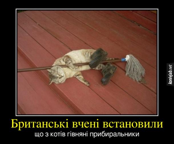 Прикол Кіт прибиральник. Британські вчені встановили, що з котів гівняні прибиральники