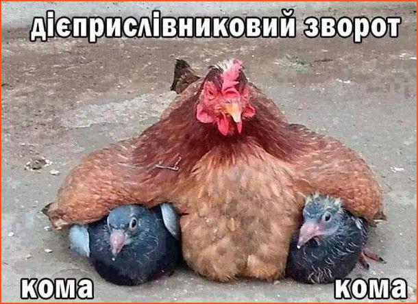 Мем Правопис. Курка тримає двох голубів під крилами. Дієприслівниковий зворот виділяється комами