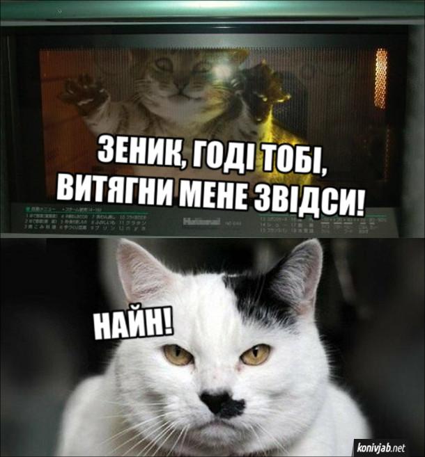 Жарт про двох котів. Кіт в духовці: - Зеник, годі тобі, витягни мене звідси! Кіт, схожий на Гітлера: - Найн!