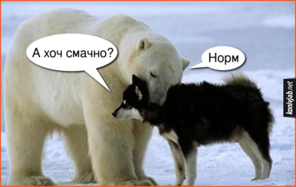Прикол Білий ведмідь і собака. Білий ведмідь грається з собакою. Схопив зубами за шию ніби їсть. Пес: - А хоч смачно? Ведмідь: - Норм.