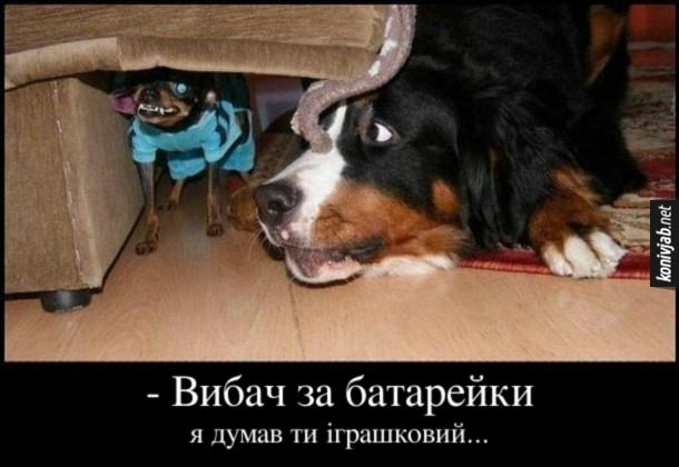 Жарт Великий і малий собака. Великий пес до злого маленького песика (типу чихуахуа) і каже: - Вибач за батарейки, я думав ти іграшковий…