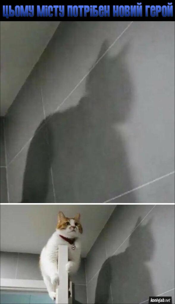 Смішна тінь від кота. Цьому місту потрібен новий герой. Тінь ніби від Бетмена, а тасправді то від кота, що сидить на дверях