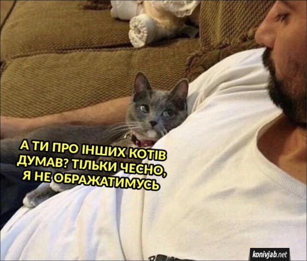 Смішна фотка Ревнивий кіт. Кіт до господаря: - А ти про інших котів думав? Тільки чесно, я не ображатимусь