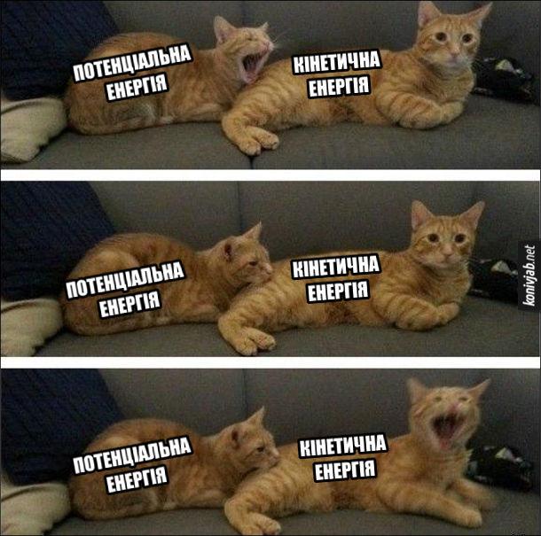 Фізичний мем. На прикладі двох котів показано, як потенціальна енергія переходить в кінетичну