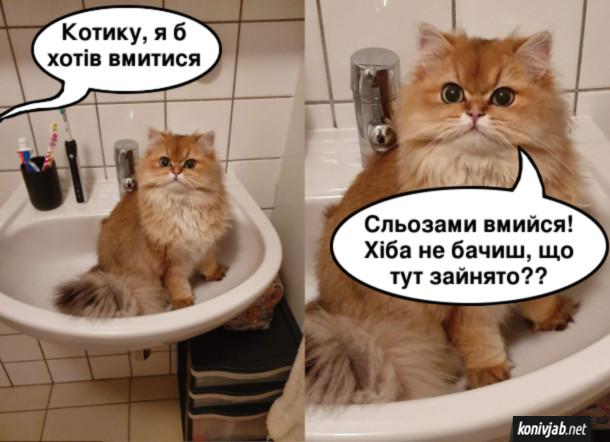 Прикол Кіт в умивальнику. Господар до нього: - Котику, я б хотів вмитися. Кіт: - Сльозами вмийся! Хіба не бачиш, що тут зайнято??