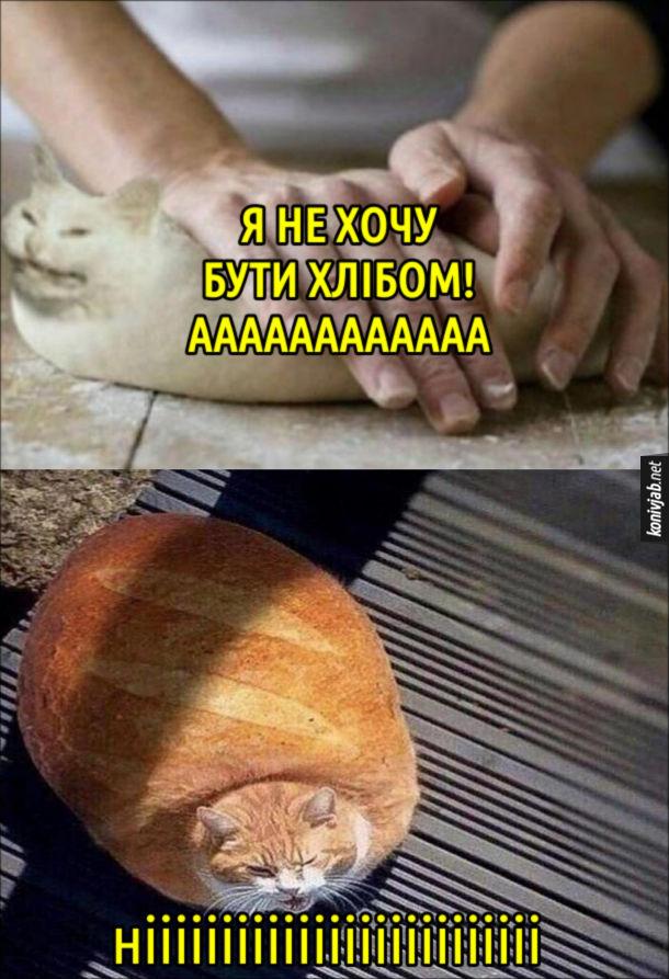Смішна фотка про кота. Кота місять наче тісто. Кіт: - Я не хочу бути хлібом! Аааааааааааа. З кота спекли хлібину. Кіт: - Ніііііііііііііііііііііііііі