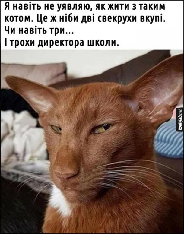 Мем Суворий кіт. Я навіть не уявляю, як жити з таким котом. Це ж ніби дві свекрухи вкупі. Чи навіть три... І трохи директора школи.