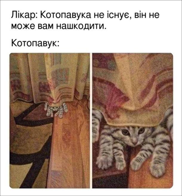 Смішна фотка з кошенятами. Лікар: Котопавука не існує, він не може вам нашкодити. Котопавук: виглядає з-під штори