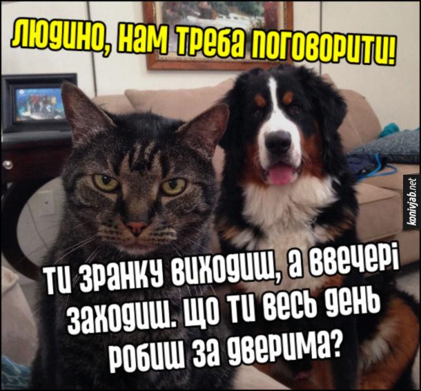 Мем кіт і собака. Людино, нам треба поговорити! Ти зранку виходиш, а ввечері заходиш. Що ти весь день робиш за дверима?
