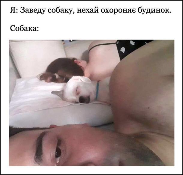 Мем Лінива собака. Я: Заведу собаку, нехай охороняє будинок. Собака: вночі солодко спить на ліжку