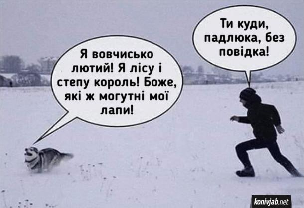 Прикол Хаскі бігає по снігу. Собака біжить по снігу: - Я вовчисько лютий! Я лісу і степу король! Боже, які ж могутні мої лапи! Господар біжить за ним: - Ти куди, падлюка, без повідка!