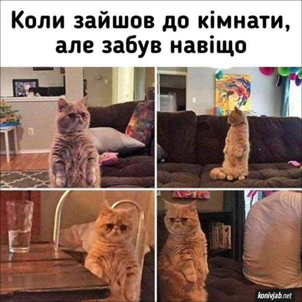 Смішний кіт. Коли зайшов до кімнати, але забув навіщо. Перська кішка