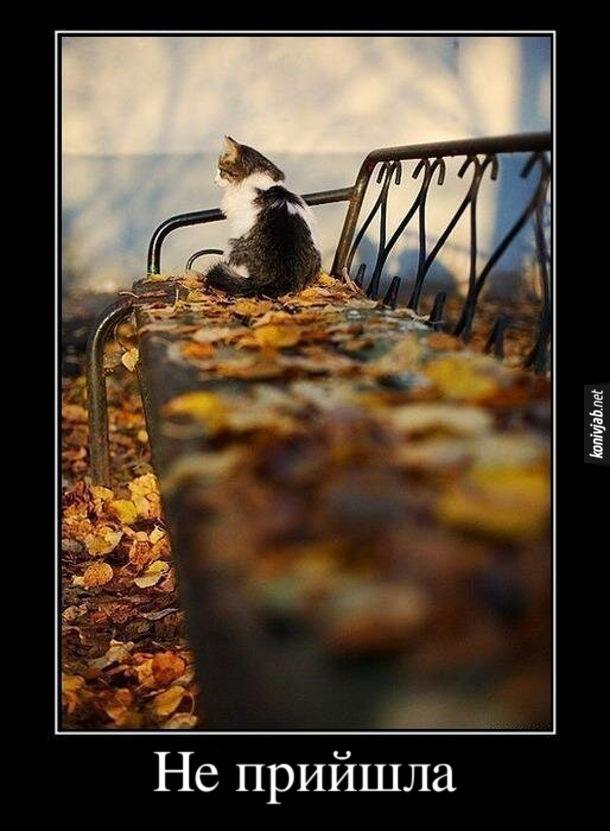 Демотиватор Кіт сумно сидить на лавці. Не прийшла