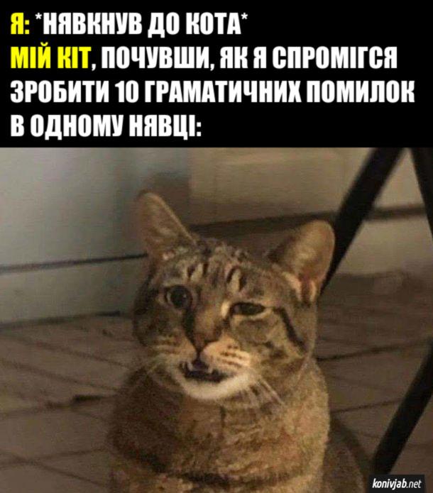 Прикол Нявкнув до кота. Я: нявкнув до кота. Мій кіт, почувши, як я спромігся зробити 10 граматичних помилок в одному нявці: скривився