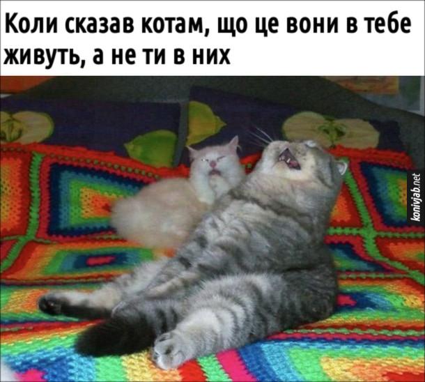 Мем коти сміються. Коли сказав котам, що це вони в тебе живуть, а не ти в них