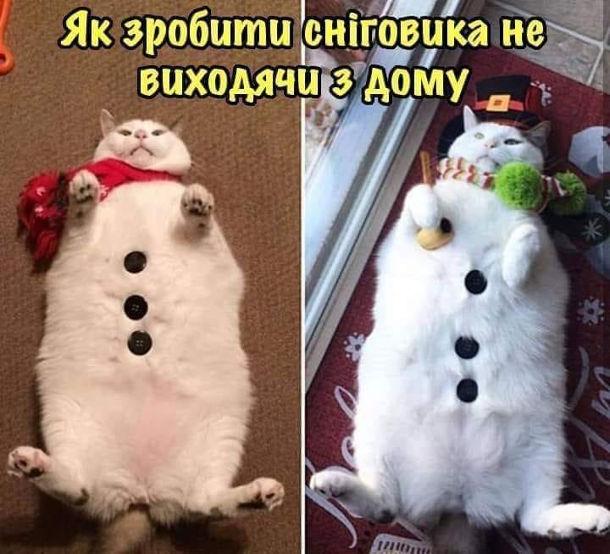 Прикол Сніговик з кота. Як зробити сніговика не виходячи з дому. Гладкий білий кіт.
