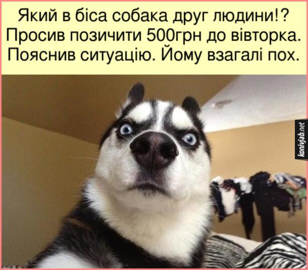 Мем Чи собака друг людини? Який в біса собака друг людини!? Просив позичити 500грн до вівторка. Пояснив ситуацію. Йому взагалі пох.