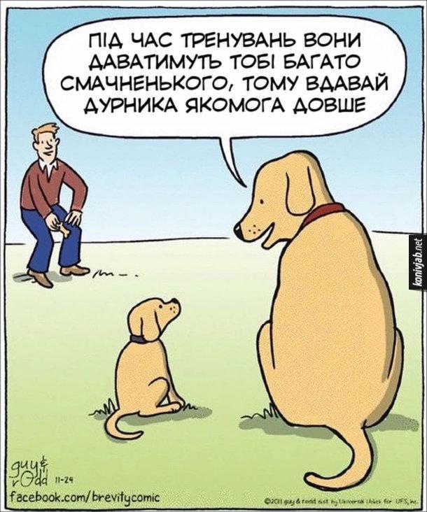 Жарт Тренування собаки. Пес-батько до свого сина: - Під час тренувань вони даватимуть тобі багато смачненького, тому вдавай дурника якомога довше