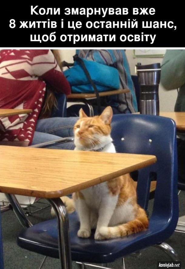 Прикол Кіт-студент. Коли змарнував вже 8 життів і це останній шанс, щоб отримати освіту