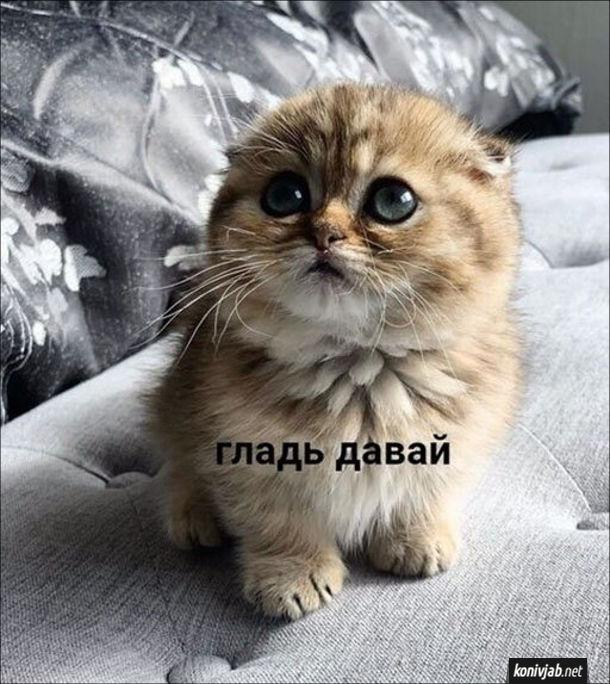 Смішний котик дивиться, ніби каже: - Гладь давай