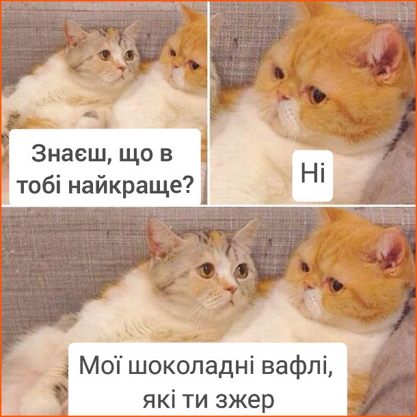 Смішна картинка про котів. Два коти. - Знаєш, що в тобі найкраще? - Ні. - Мої шоколадні вафлі, які ти зжер