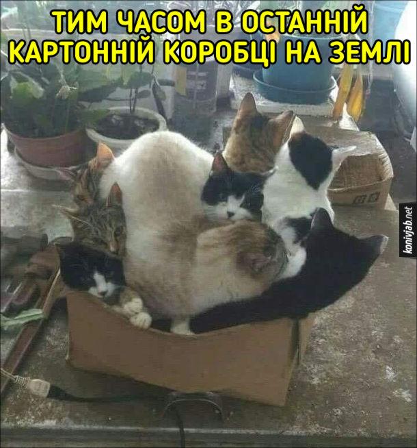 Багато котів в одній коробці. Тим часом в останній картонній коробці на Землі