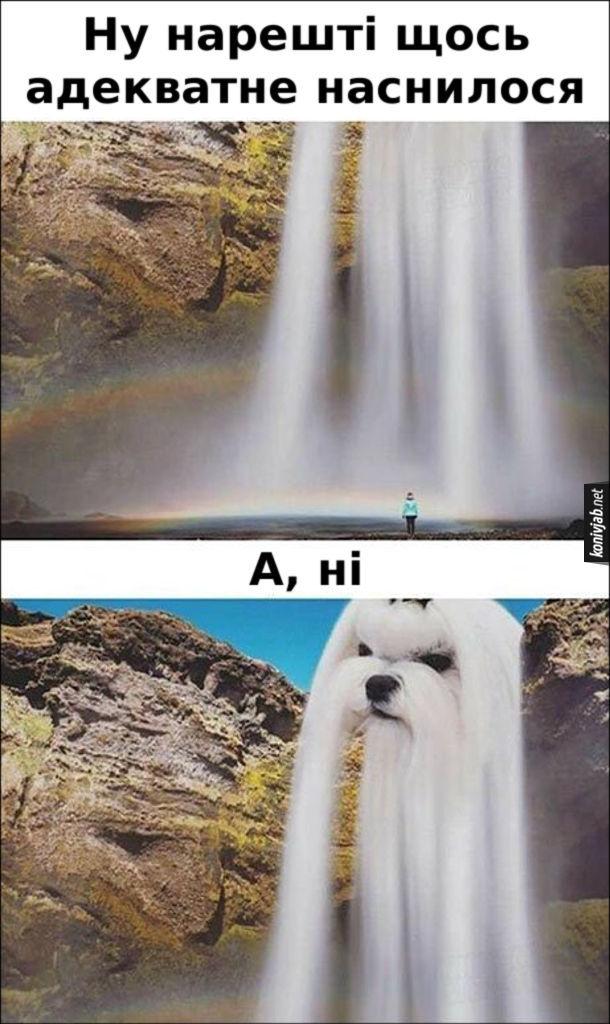 Прикол  абсурдний сон. Ну нарешті щось адекватне наснилося - водоспад. А, ні - то не водоспад а вуха собаки