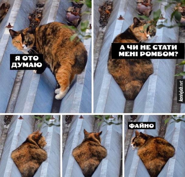 """Прикол кіт на даху. Кіт сидить на даху і розмірковує: """"Я ото думаю, а чи не стати мені ромбом?"""" Сів у жолоб і став схожий на ромб. Думає: """"Файно"""""""