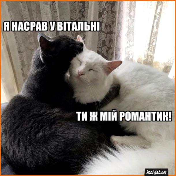 Прикол Романтика в котів. Кіт: - Я насрав у вітальні. Кішка: - Ти ж мій романтик!