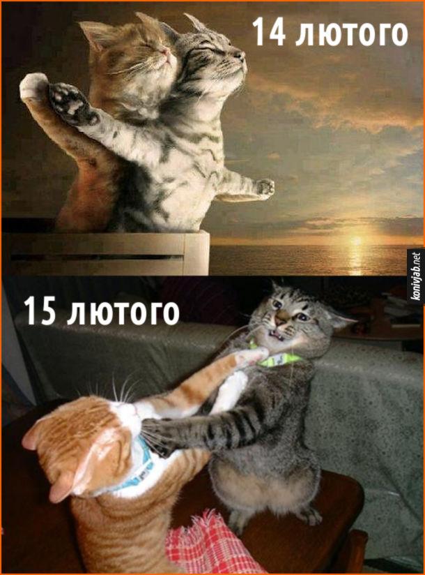 """Мем Коти на день Валентина 14 лютого - ніби романтична сцена в """"Титаніку""""; 15 лютого - б'ються"""