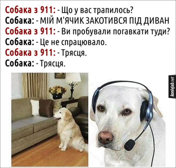 Прикол Собака згубив м'ячик. Собака з 911: - Що у вас трапилось? Собака: - Мій м'ячик закотився під диван. Собака з 911: - Ви пробували погавкати туди? Собака: - Це не спрацювало. Собака з 911: - Трясця. Собака: - Трясця.