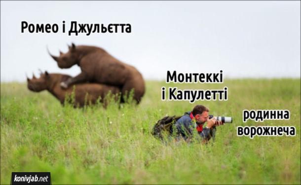 Мем Ромео і Джульєтта в короткому викладі. Паруються носороги (Ромео і Джульєтта), а фотограф (родини Монтеккі і Капулетті) націлився зовсім в інший бік (родинна ворожнеча)