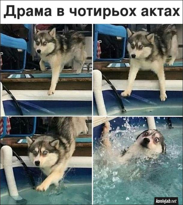 Прикол Пес впав в басейн. Драма в чотирьох актах. Чотири фото, де собака оступився і впав до басейну