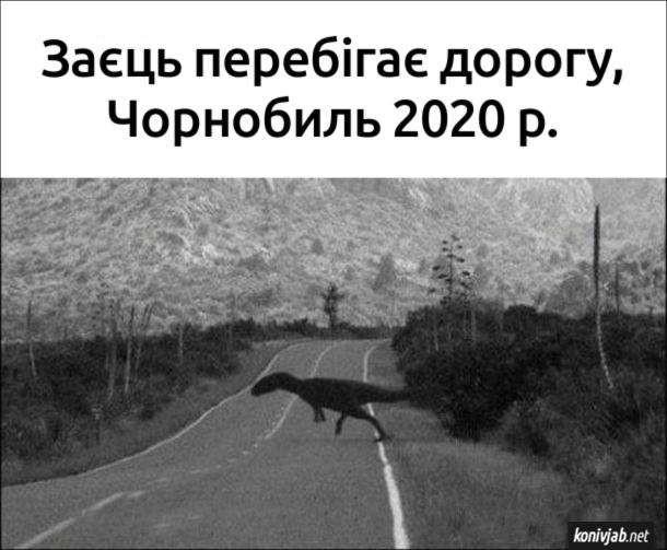 Прикол Чорнобильський заєць. Заєць перебігає дорогу, Чорнобиль 2020 р.