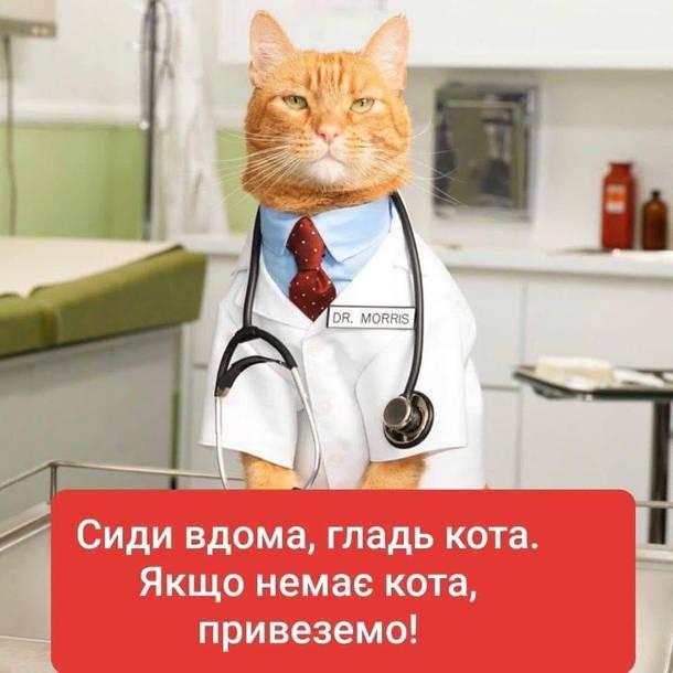 Сиди вдома, гладь кота. Якщо немає кота, привеземо!